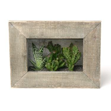 Snickra ihop eller köp en enkel träram med botten och placera suckulenter däri som om det vore ett tittskåp. Enkelt och dekorativt! Foto: Floradania