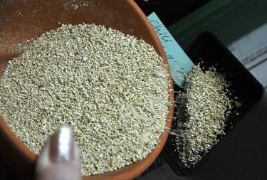 Sätt på etikett och täck fröna med vermikulit eller såjord.  Foto: Bernt Svensson