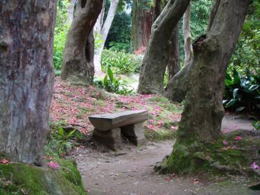 Trolskt i Villa Carlottas trädgård! Marken är täckt av rododendronblad och stammarna är rododendronträd, _Rhododenron arboreum_!