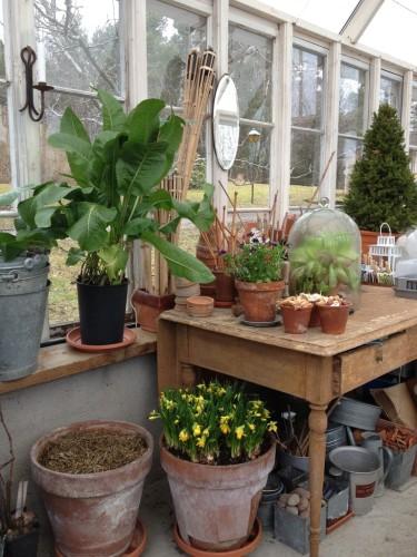 Mitt växthus i april.