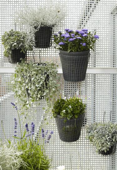 Olika, vackra växter i hängande krukor kan enkelt arrangeras över en vägg. Foto: Floradania