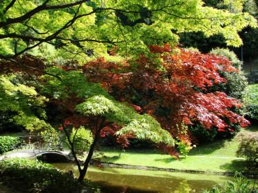 Den japanska trädgården. En plats för lugn och eftertanke.