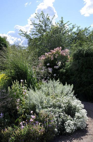 Pröva silvrigt bladverk, vitt och kalla rosa och lila nyanser mot ett ljusblått eller vitt hus! Foto: Bernt Svensson