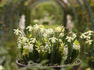 Ljusa färger i kruka som välkomnar våren! Foto: Blomsterfrämjandet/IBC