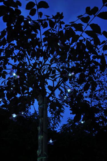 Rosa fjärilar i trädet.Foto: Bernt Svensson