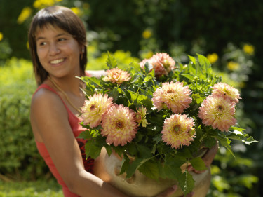 Med famnen full av Dahlia 'Gallery Pablo'! Foto: Blomsterfrämjandet