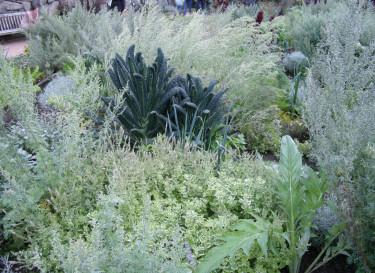 Gunnebo - kryddväxter, palmkål mm Foto: Sylvia Svensson