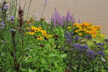 Många av de ingående växterna syns här. Foto: Bernt Svensson