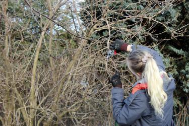 Beskär buskar och träd på vårvintern // Foto: Anna Theorin