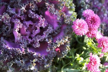 Prydnadskål passar i många sammanhang. Foto: Blomsterfrämjandet