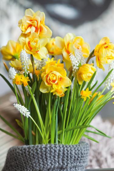 Att ha flera olika lökväxter tillsammans är oemotståndligt vackert.  Foto: Blomsterfrämjandet.