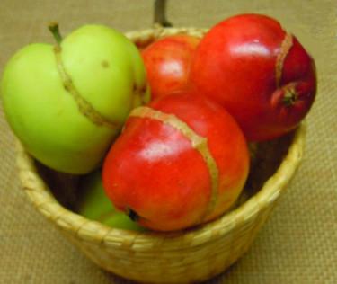 Skador av äppelstekel, _Hoplocampa testudinea_. Foto: Sylvia Svensson