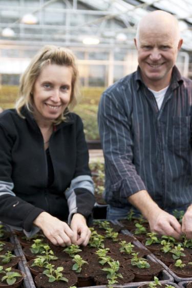 Helene och Paul Orevad toppar fuchsiaplantor inför våren och sommaren 2009. Foto: Blomsterfrämjandet.