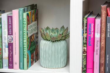 Dekorera med växter! Skapa liv i bokhyllan eller på andra platser med växter som inte kräver så mycket vatten, t.ex. Echeveria. Foto: Floradania