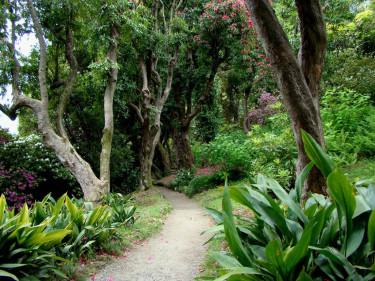Här ligger en riktig rododendronskog med _Rhododenron arboreum_, rododendronträd. Riktigt häftigt!