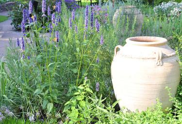 Kryddväxter i Göteborgs Botaniskas soliga kryddgård