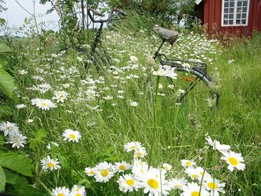 Sommartorpet. Foto: Sylvia Svensson