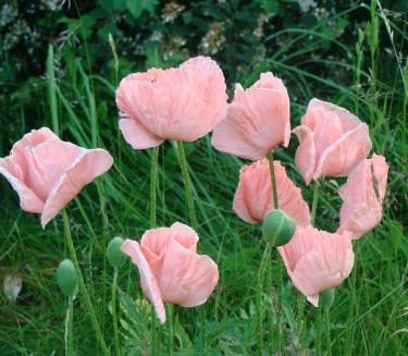 När vallmon väl blommar fram i juni har vi kommit en bit i våra trädgårdssysslor. Då samlar vi ihop nya artikeltips!