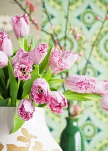 Fransiga tulpaner Foto: Blomsterfrämjandet