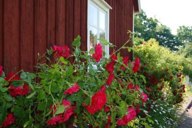 Vackert mor den faluröda fasaden!