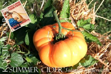 'Summer Cider' är en aprikosfärgad bifftomat som ofta blir rejält stor, över ett halvkilo är inte ovanligt.