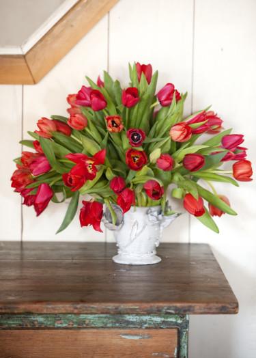 Röda tulpaner i vit vas Foto: Blomsterfrämjandet