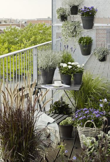 Häng växterna på väggen, ha någon/några på en pall eller liknande och så några växter på golvet. Foto: Floradania