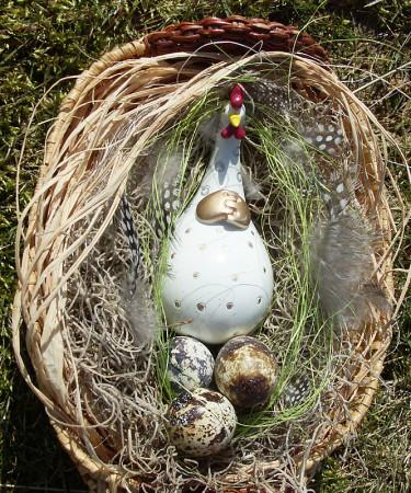 Nöjd höna med vaktelägg och pärlhönsfjädrar. Foto: Sylvia Svensson