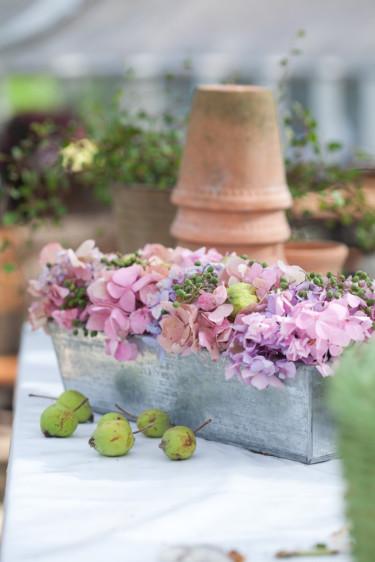 Hortensiablommor i kakform Foto: Blomsterfrämjandet