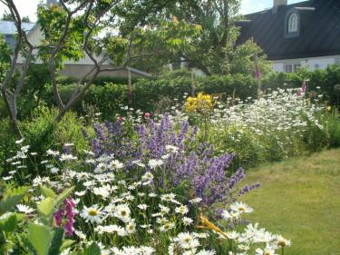 Juli är här med all sin blomsterprakt! Odla.nu ger tips för sommarträdgården men vill också slå ett slag för lata dagar då rabatterna får sköta sig bäst de vill! Foto: Katarina Kihlberg