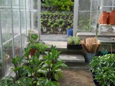 I Källdalens Trädgårdar odlas det ekologiskt både i växthus och på friland. Foto: Susanne Lundberg