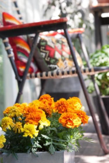 Starka färger lyser upp.  Foto: Blomsterfrämjandet/Anna Skoog