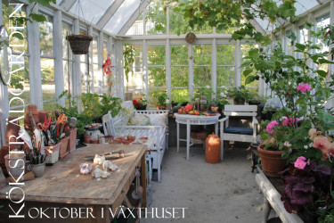 Oktober i växthuset