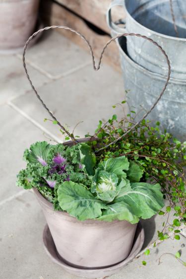 Prydnadskål tillsammans med hjärta och plättar i luften. Foto: Blomsterfrämjandet/Minna Mercke Schmidt