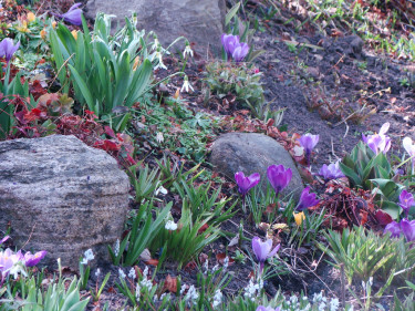 Arbeta med, inte emot, de naturliga förutsättningarna i din trädgård. Här en vårbacke i en stensluttning.