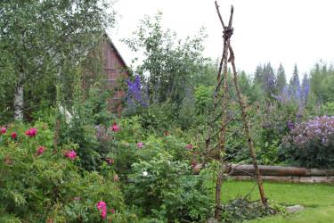12 augusti 2012 öppnas trädgårdar i hela landet för besökare. Bilden är från Mariana Mattssons trädgård i Blåviksjön, som deltar i Tusen Trädgårdar. Foto: Gunnel Carlson