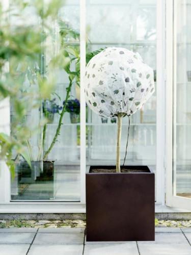 När vårsolen börjar värma är det dags att tänka på de vintergröna växterna. Foto: Weibulls.