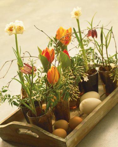 Intresset för lökväxter i krukor ökar allt mer.
