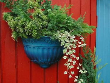 Lösa kvistar av vintergröna växter och murgröna på rot.Foto och arr: Sylvia Svensson