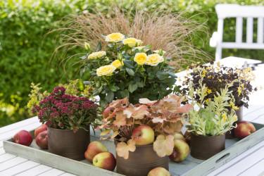 Gör ett vackert arrangemang på en bricka. Effektfullt! Foto: Floradania