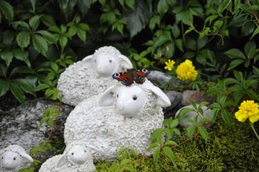 Agnetha Eriksson har skickat bilden på söta får som inbjuder till vila och värme för fjärilar och andra insekter.