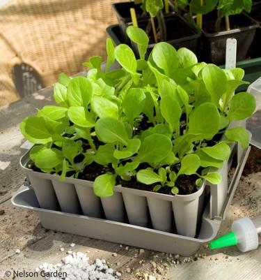 """""""Jag använder pluggboxar, perfekt för mig tycker jag. Ordning på de små plantorna och lätt att hantera."""" Så kommenterar en läsare på Odla.nu pluggboxen! Foto: Nelson Garden"""