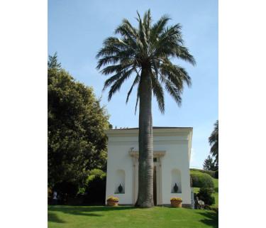 När palmen planterades en gång i tiden var det nog ingen som tänkte på hur det skulle bli!