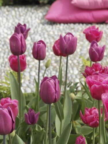 Smarta blomsterlökar - utrustade med naturlig intelligens. Foto: Blomsterfrämjandet /IFBC.