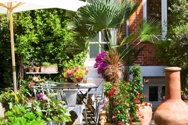 Låt växterna skapa sydeuropeisk stämning på terrassen.