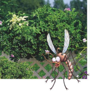 'Moskito Shocker', doftar tallbarr och citron, avskräckande för myggor.