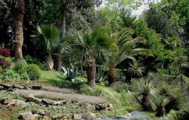 En kargare del av Villa Carlottas trädgård.