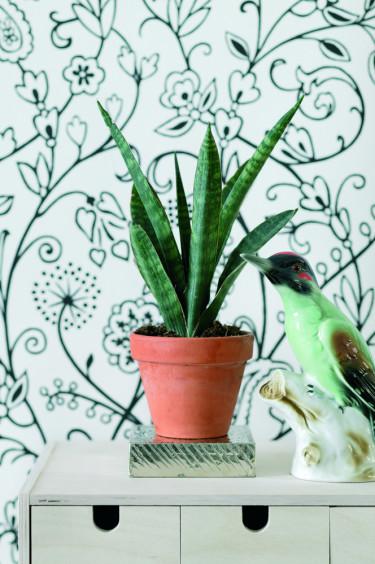 Svärmorstunga, _Sansevieria trifasciata_, börjar återigen bli populär. Foto: Floradania