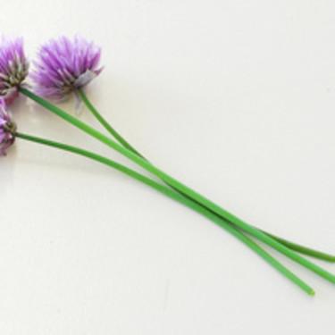 **Gräslök**, _Allium schoenoprasum_