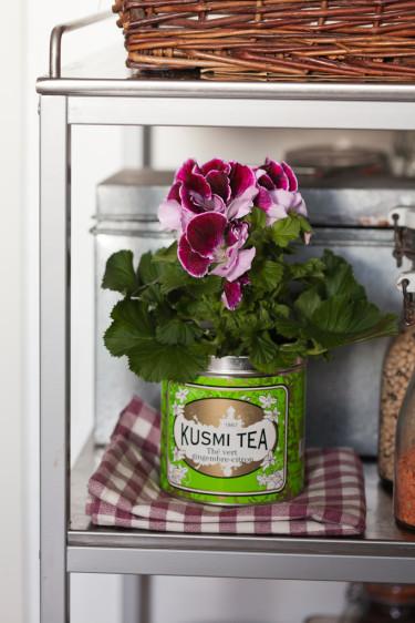 Engelsk pelargon, _Pelargonium x domesticum_, i teburk.  Foto: Blomsterfrämjandet/Minna Mercke Schmidt